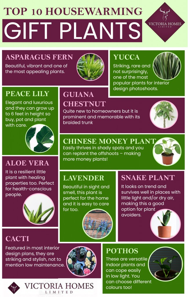Top10-Housewarming-Gift-Plants-648x1024 Best Housewarming Plant on best sympathy plant, best food plant, best good luck plant, best type of gift to give as a plant, best coffee plant, best roses plant,